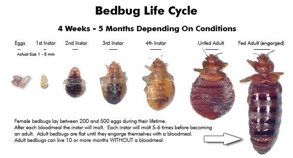 bed-bug-control-victoria